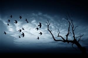 türkyorum - umut ve korku anka kuşunun yolculuğu
